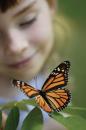 CIN_butterfly